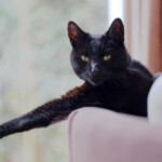 Black cat laying couch: SBDPro Small Business Blog